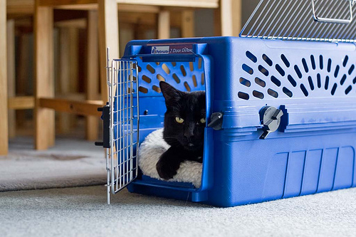 how to get a scared cat into a carrier