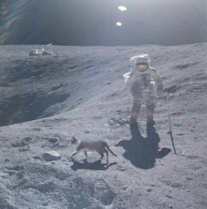 A cat using the litterbox on the moon. Ideal size and substrate make the moon a destination for space traveling cats.