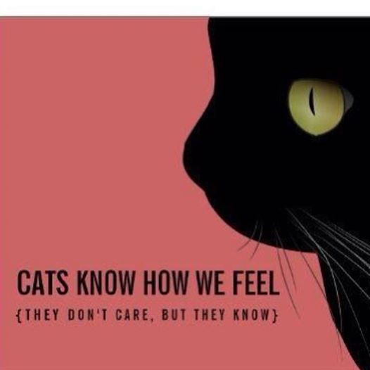 Cats know how we feel