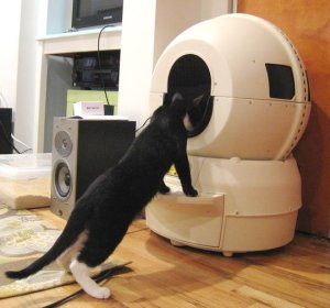 The Litter Robot is like a ferris wheel of cat poop in your living room.