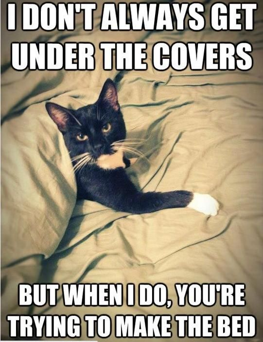 cat-owner-26