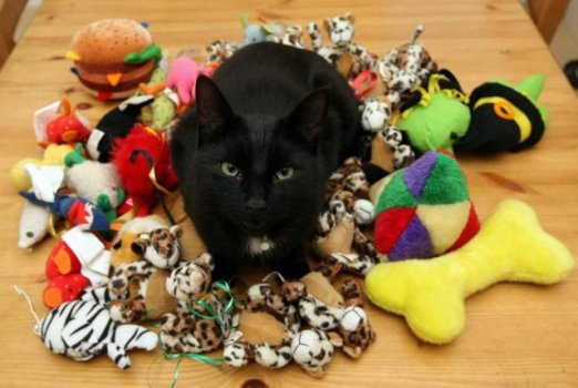 Cats-playing-toys-2
