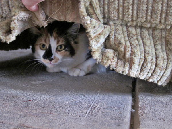 Cat-hiding-under-furniture